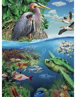 Preserve the Earth 2015: Conservation of Marine Life