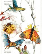 Earth Day 2009: Pollinators and Our Food Supply